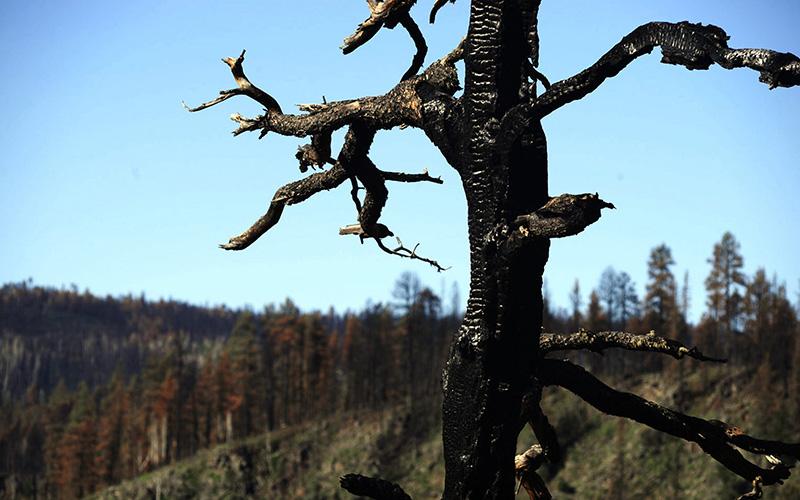Wallow Fire mudslides