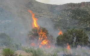Guadalupe Fire