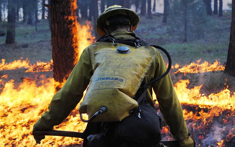 A firefighter works the fire line on the Sitgreaves Complex Fire in the Kaibab National Forest in 2014. A July 13, 2014, lightning strike started the blaze, which ultimately burned 11,080 acres. (Photo by Holly Krake/USDA)