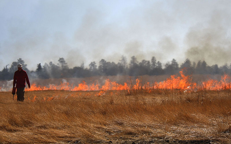 A firefighter walks past a line of fire that was set as part of a controlled burn in 2008 in the Coconino National Forest. Advocates say burns like this head off bigger fires later. (Photo by Ian Horvath/U.S. Forest Service)
