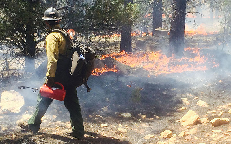 A firefighter keeps an eye on the Rock Fire that broke out July 31 and is burning south of Tusayan. The blaze is expected to continue burning to the northeast over the next fews days. (Photo courtesy U.S. Forest Service)