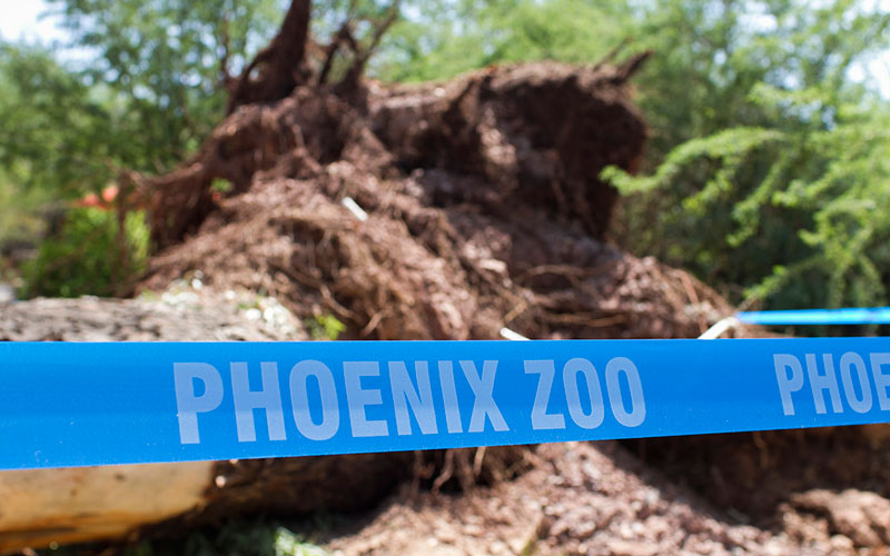 The Phoenix Zoo reopened on Sept. 4 after being closed for three days due to damages caused by a storm earlier in the week. (Photo by Thomas Hawthorne/Cronkite News)