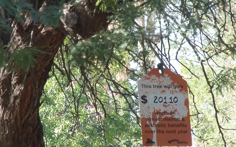 The orange price tags hang on trees in Encanto Park in Phoenix. The tags show the estimated value of the tree. (Photo by Eboni Johnson/Cronkite News)