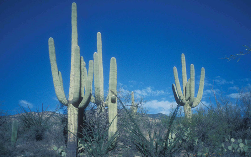 Saguaro National Park near Tucson is one of the parks that would get funding under President Barack Obama's fiscal 2017 budget, which seeks $900 million to revive the Land and Water Conservation Fund.