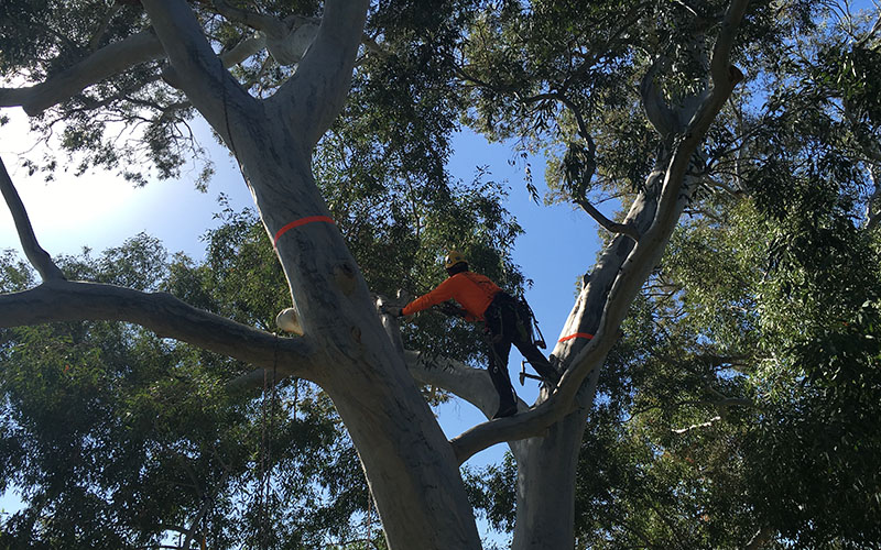 Arizonans competed in Arizona's Tree Climbing Championship in the Tonto National Forest this weekend. (Photo by Ben Margiott/Cronkite News)