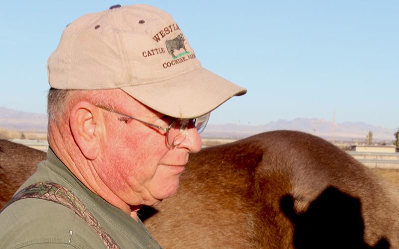 Shortage of large animal veterinarians threatens health of