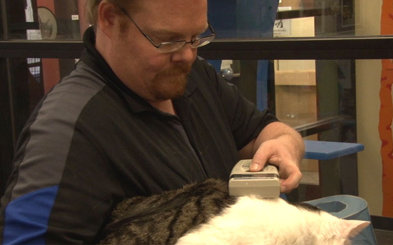 Michael Morefield, Marketing and Communications Director for the Arizona Animal Welfare League, checks a rescued cat's microchip number. (Photo by Elena Mendoza/Cronkite News)