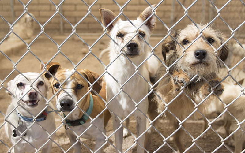 Maricopa County Dog Rescue