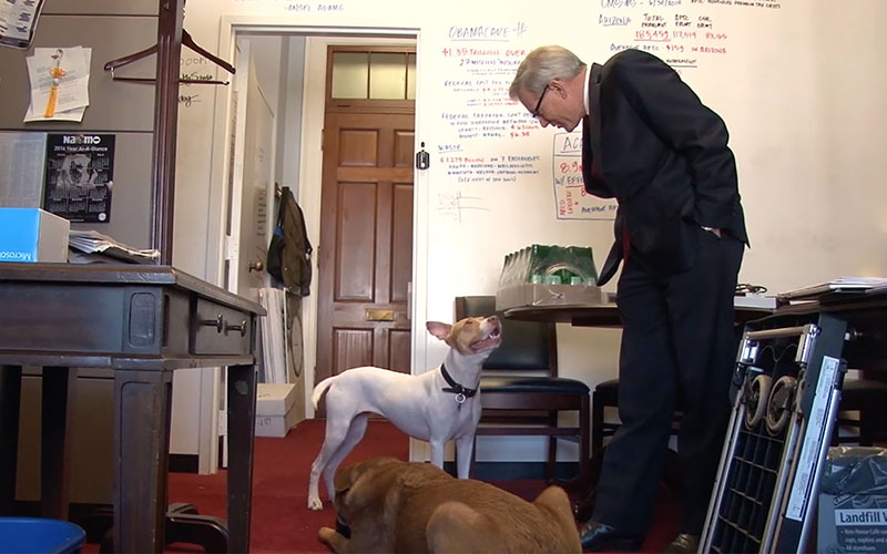 Rep. David Schweikert, R-Fountain Hills, in his Capitol Hill office with office dogs, Dixie and Sarge.