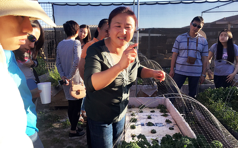 Jing Lv leads guests on a free and educational tour of her garden after a Chinese food party at her home. (Photo by Jiahui Jia/Cronkite News)