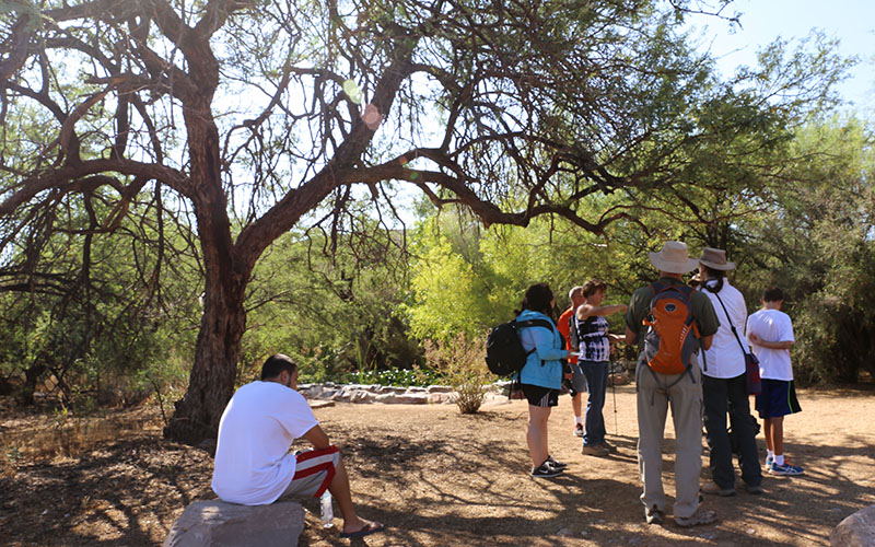Hikers learn more about the many uses of the Mesquite tree at Spur Cross Ranch Conservation Area. (Photo By Elizabeth S. Hansen/Cronkite News)