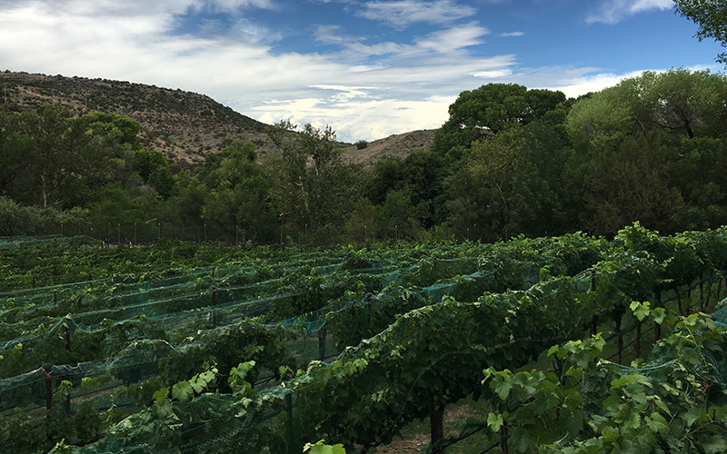 Page Springs Vineyards is reducing its water footprint by purchasing credits from a nearby family farm that has chosen not to irrigate all of its land in return for monetary credits. (Photo by Mindy Riesenberg/Cronkite News)