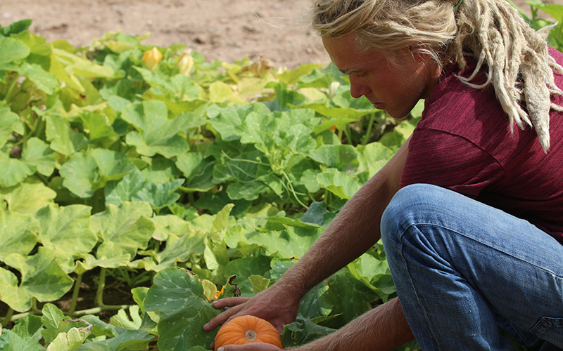 J.D. Hill, co-founder of Recycled City, said compost-based soil is used to grow new produce  like this growing pumpkin. (Photo by Kristiana Faddoul/Cronkite News)