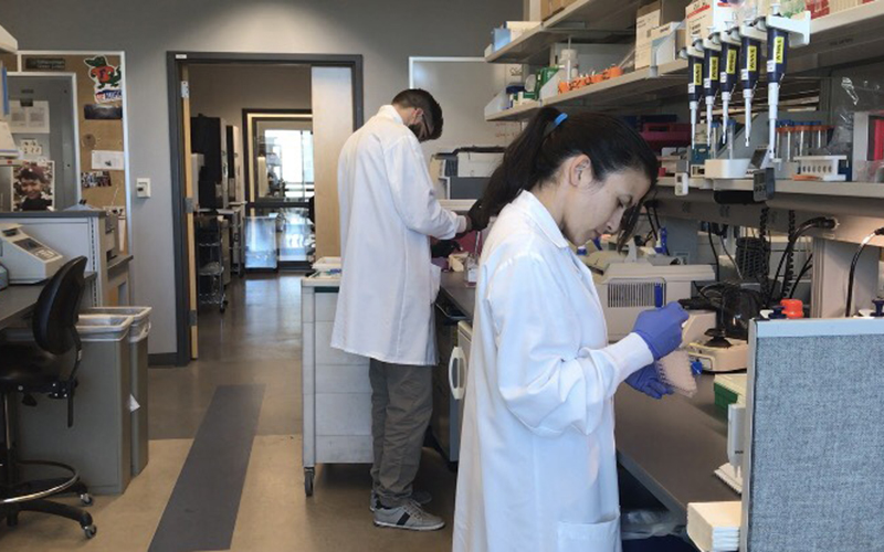 Students working on genetics research in Dr. Jeffrey Trent's lab at TGen. (Photo by Alicia Gonzales/Cronkite News)