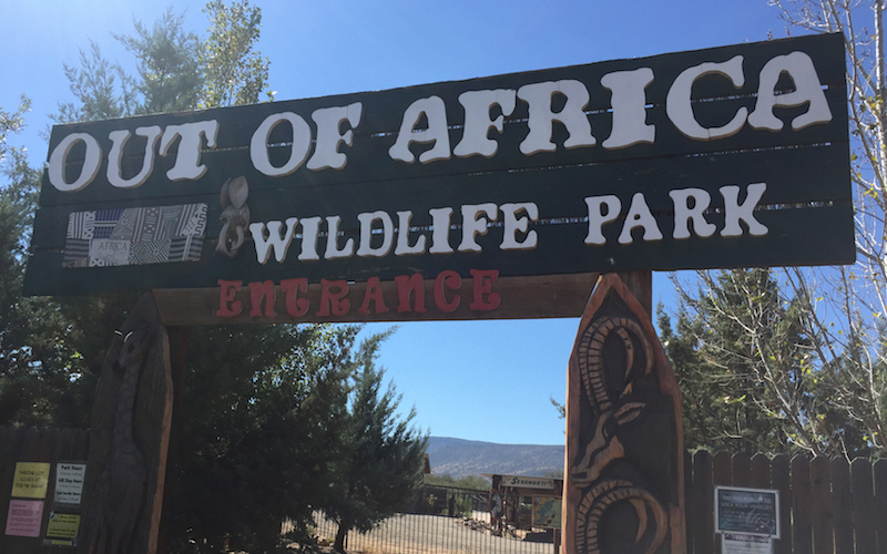 Out of Africa Wildlife Park partners with AZ Game and Fish in housing animals unfit for release back into the wild. (Photo by Kristiana Faddoul/Cronkite News)