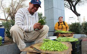 Juan Gonzalez prepares nopales (cactus) before selling them at the border crossing line in Nogales, Mexico. (Photo by Charlene Santiago/Cronkite News)