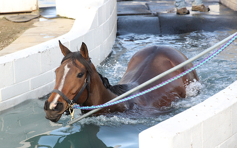 a horse eases into the equine pool at Turf Paradise on Feb. 7, 2017 in Phoenix. (Photo by Samantha Pell/Cronkite News)
