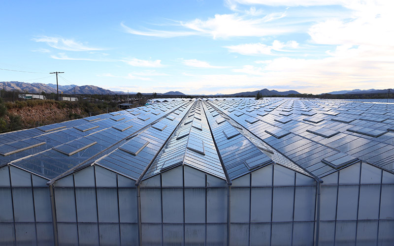 Greenhouses in Imuris, Sonora, Mexico where Wholesum Family Farms grows organic tomatoes and other produce.