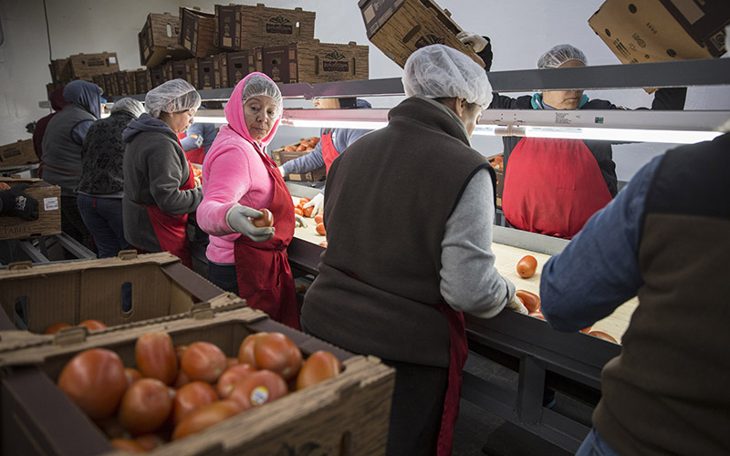 Workers sort tomatoes at the Wholesum Family Farms distribution center in Nogales, Arizona. A majority of the winter produce from Mexico crosses the U.S. border at Nogales. (Photo by Jojo Huckeba/Cronkite News)