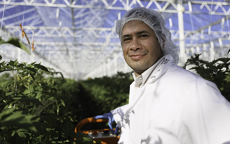 Wholesum General Manager Francisco Landell in one of the greenhouses he oversees in Immuris, Mexico where the organic produce company grows tomatoes. (Photo by Jojo Huckeba/Cronkite News)