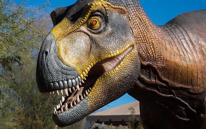 Dinosaurs In The Desert Photo Gallery