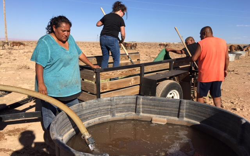Grassroots group works to save wild horses on Navajo ...