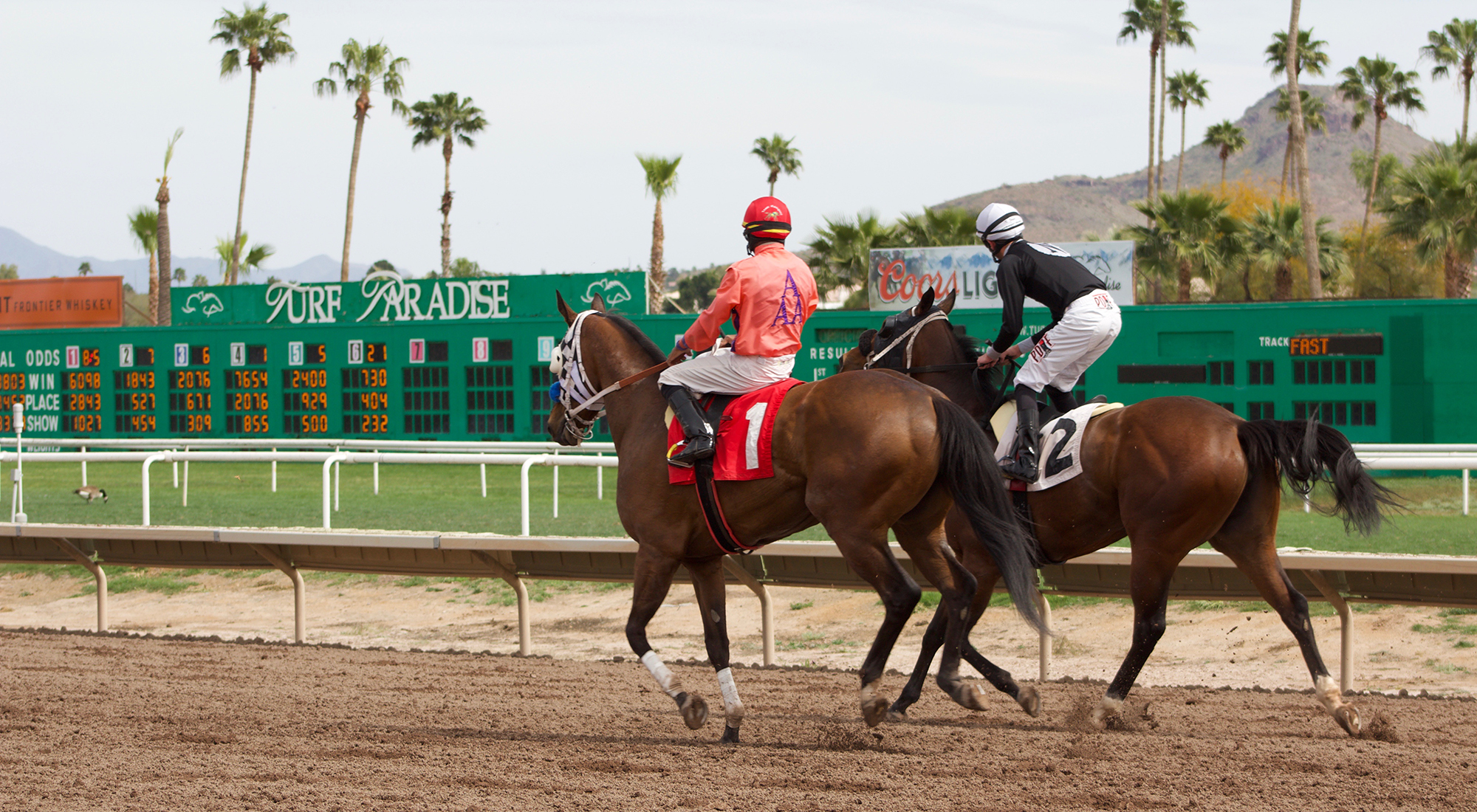 The number of horse deaths at turf paradise and other tracks around the country have alarmed the racing community a leg fracture during a race often means