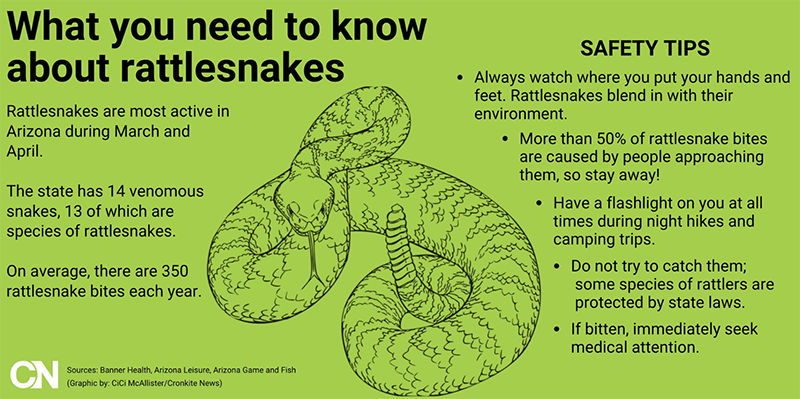 How to stay safe from rattlesnakes, other venomous snakes