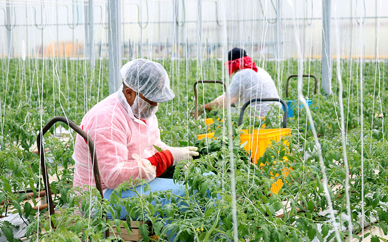 Improving the health of 'invisible' farmworkers is a community effort in Willcox