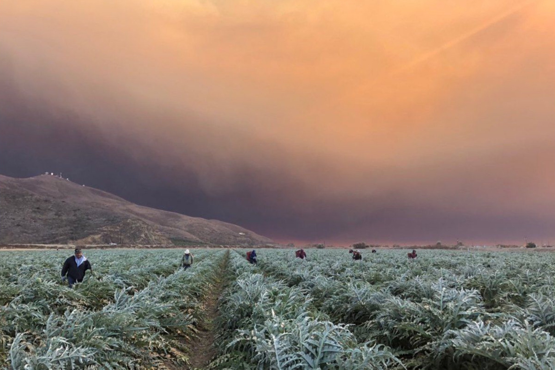 California farmworkers have endured heatwaves, wildfires and a pandemic that continues to spread during peak harvest season for almonds and wine grapes. (Photo courtesy of UFW/United Farm Workers)
